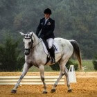 Équitation: Dressage